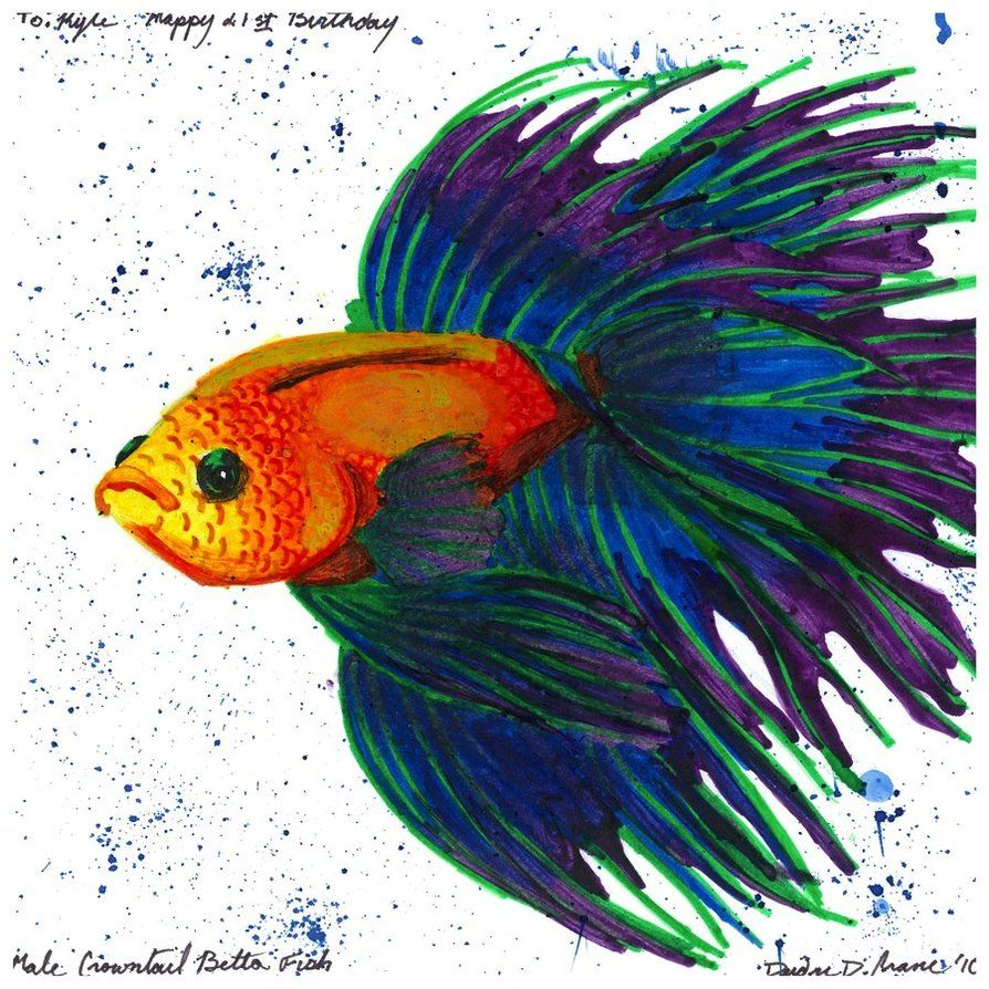 Rare Betta Fish | Crowntail Betta