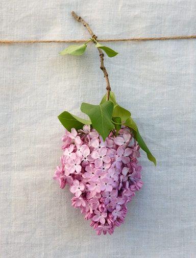 4seasons Blog Lilac Sprig Via Pinterest Lilac Flowers Love Flowers Petals