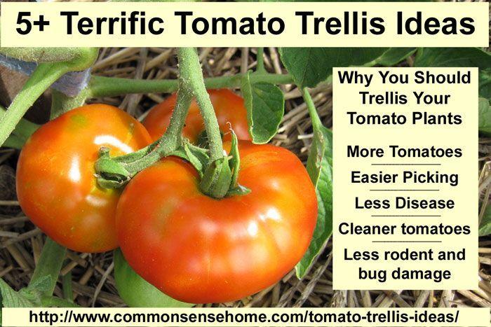 Tomato Trellis Ideas Part - 49: 5+ Terrific Tomato Trellis Ideas For Easier Picking And Cleaner Tomatoes