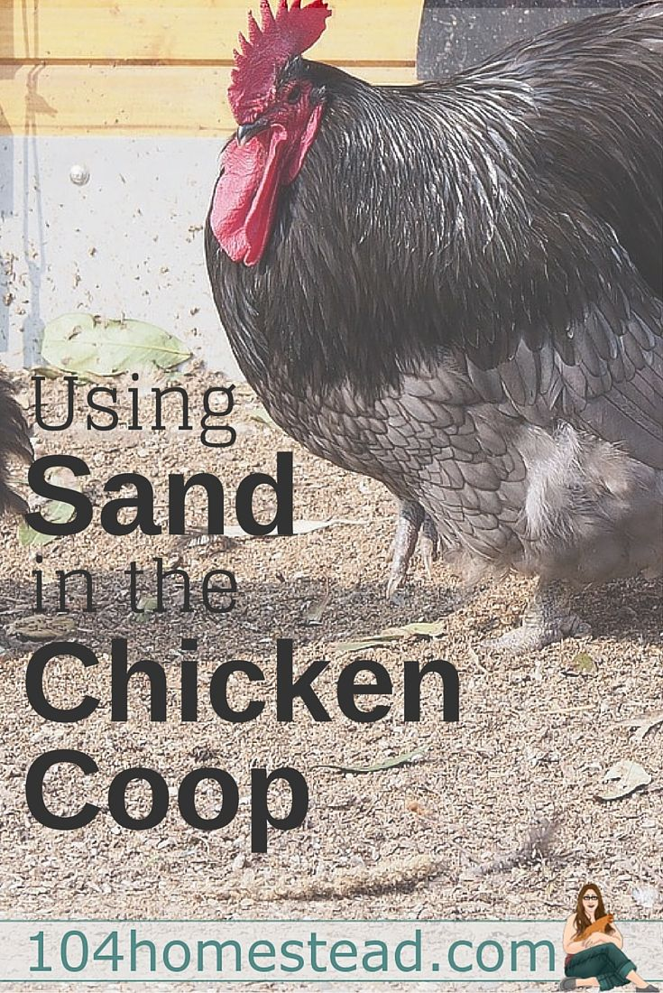 why your backyard chickens will love sand in their coop coops