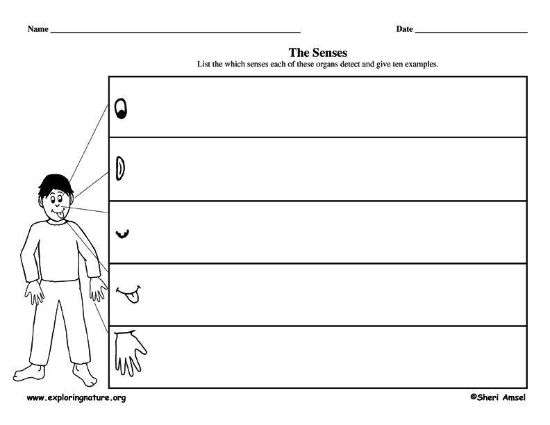 5 Writing Descriptive Graphic Organizer Senses