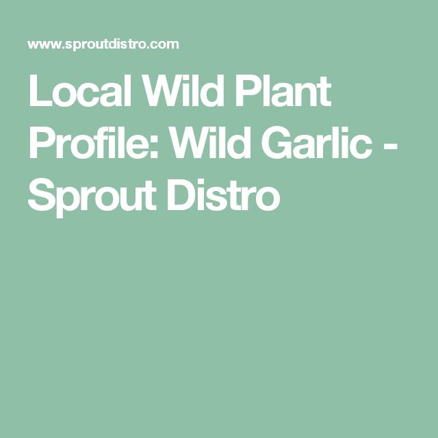Local Wild Plant Profile: Wild Garlic - Sprout Distro ...