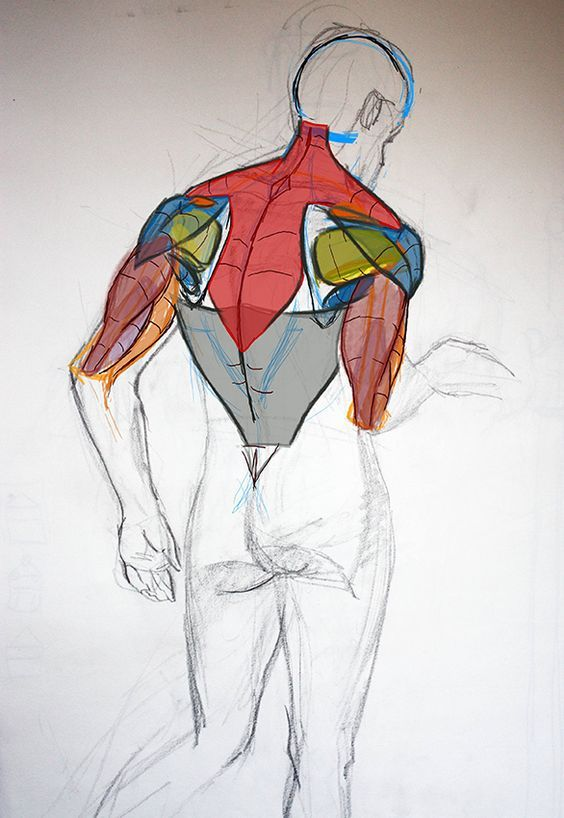 Character Design Collection: Male Anatomy - Daily Art, references ...