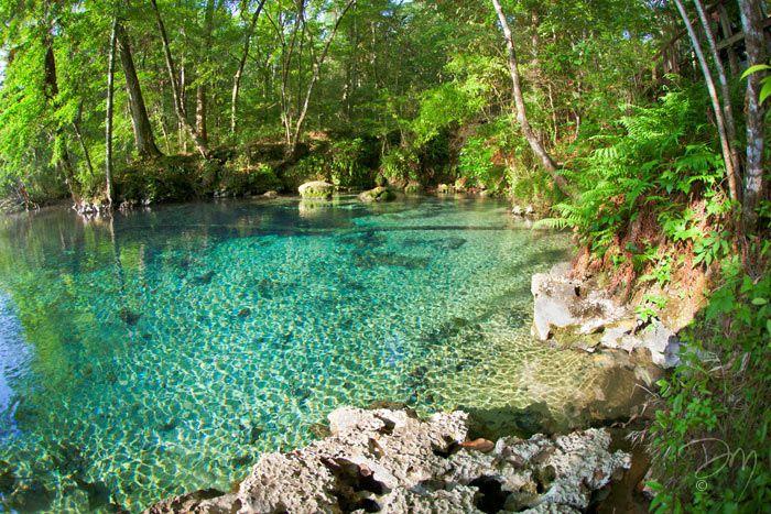 Florida Gainer Glory Swimming Pools Backyard Natural Swimming Pools Natural Pool