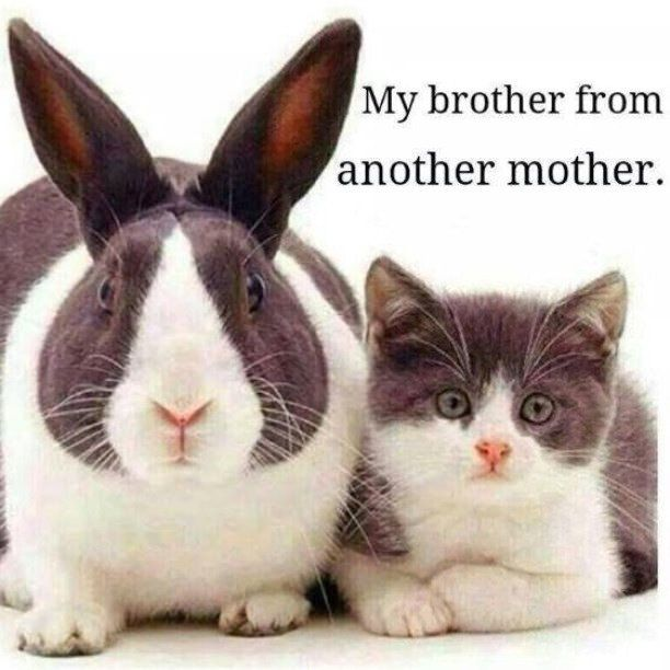 My Brother From Another Mother Funny Quotes Animals Quote Cats Lol Funny Quote Funny Quotes Bunny Humor Cute Animals Animals Cats And Kittens