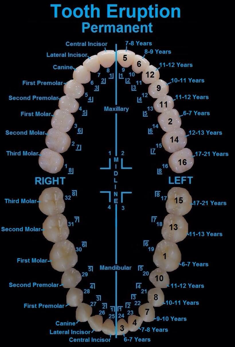Anatomy of a tooth - Maureen A Gonta, DDS, PC | #Corning | #NY | www ...