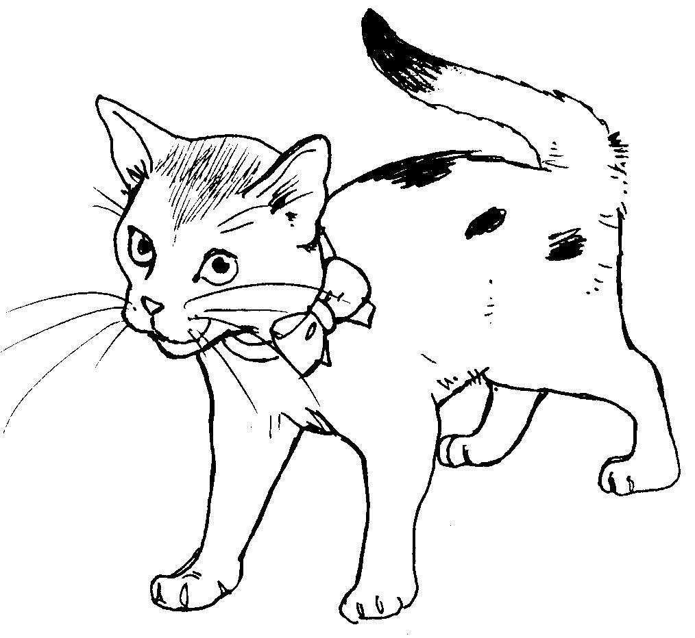 malvorlagen katzen baby  tier ausmalbilder