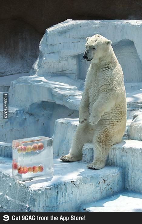 #polarbearproblems