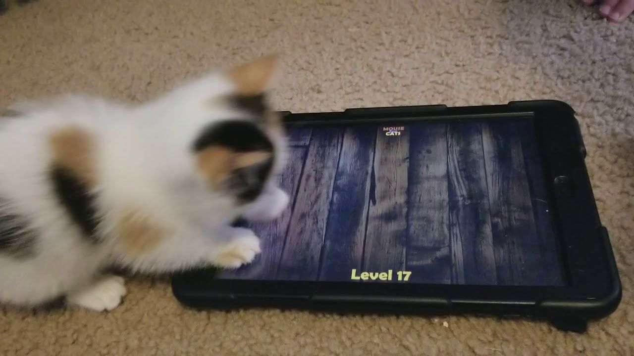 Pin By Mouse For Cats Ipad And Andr On Mouse For Cats Ipad And Android Game For Cats Cat Mouse Munchkin Kitten Kittens Playing