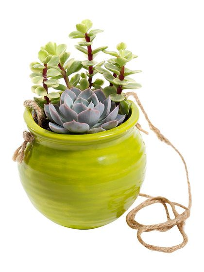 Live Hanging Succulent Planter by Source Succulents at Gilt