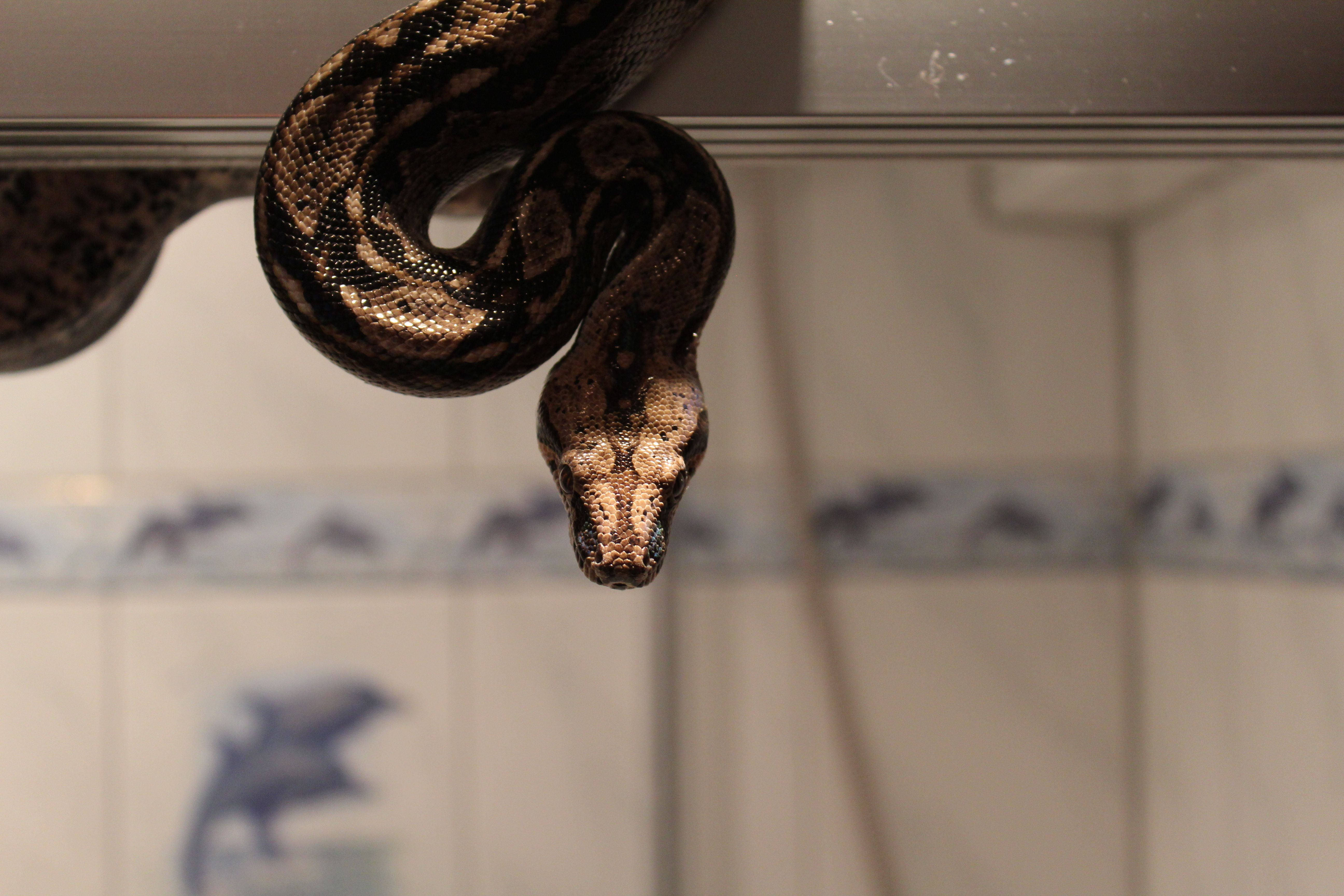 Pin by Dorbn on Snake photography Snake, Reptiles and
