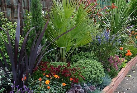 Architectural planting for height in small gardens for Easy to maintain garden borders