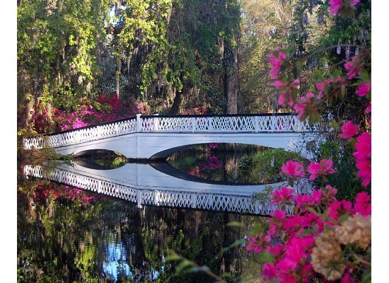 Magnolia Plantation And Gardens Charleston Sc 29414