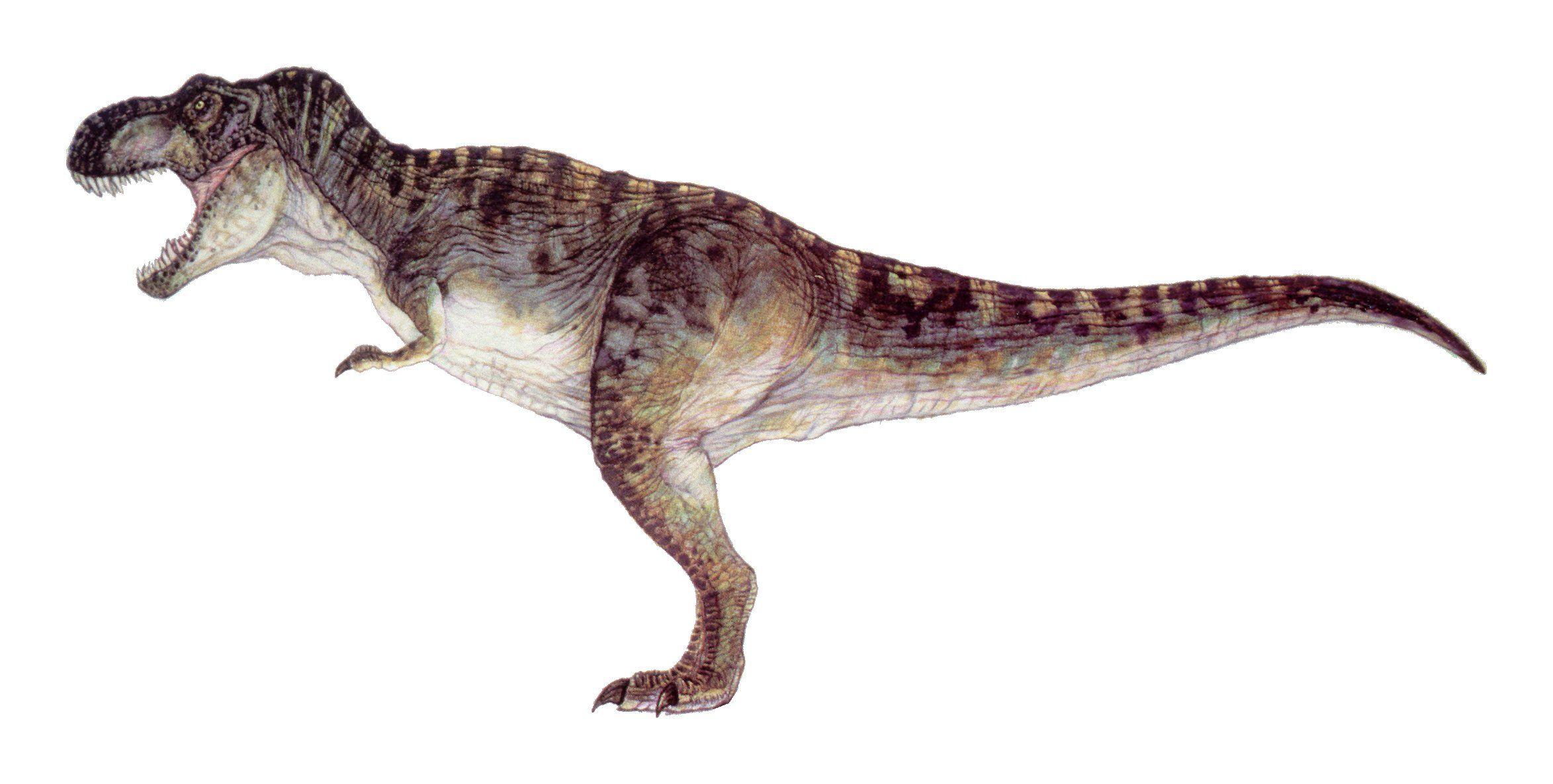 tyrannosaurus rex jurassic park and tyrannosaurus