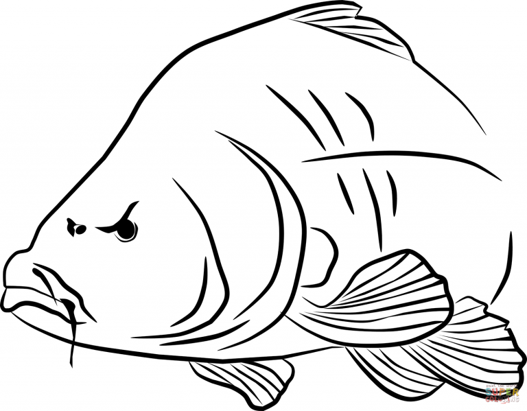 Free Printable Coloring Pages For Crucian Carps Coloring Pages For Free