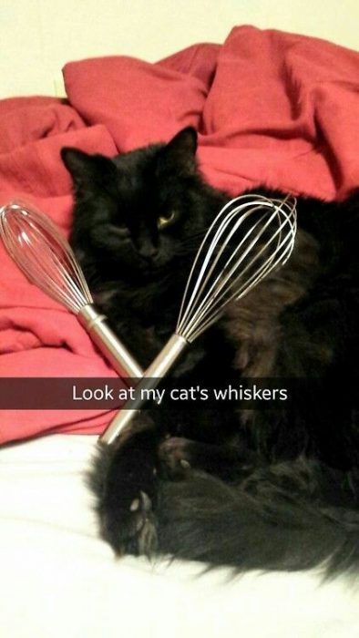 Best Funny Puns 27 Funny Animal Pictures and Snapchats - #funnycats #funnydogs #funnyanimals #animalpics #cuteanimals