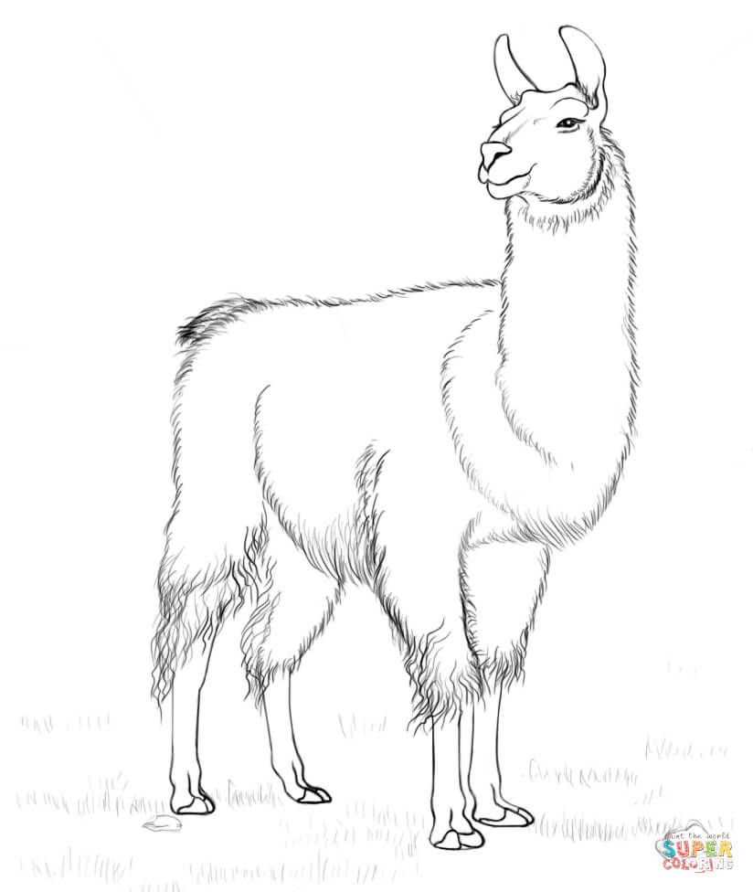 Llama coloring page Free Printable Coloring Pages 4th Grade Math