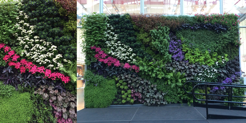 California Academy of Sciences Living Wall, Green Wall, Vertical Garden - Habitat Horticulture
