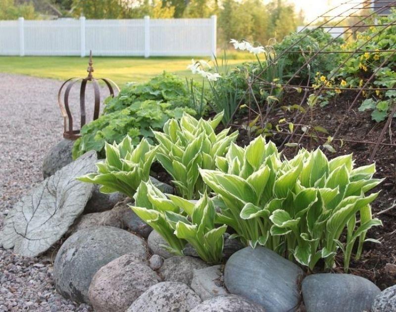 vorgarten-gestalten-41-pflegeleichte-und-moderne-beispiele - vorgarten gestalten pflegeleicht modern