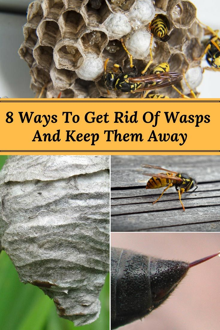 8 ways to get rid of wasps and keep them away get rid of