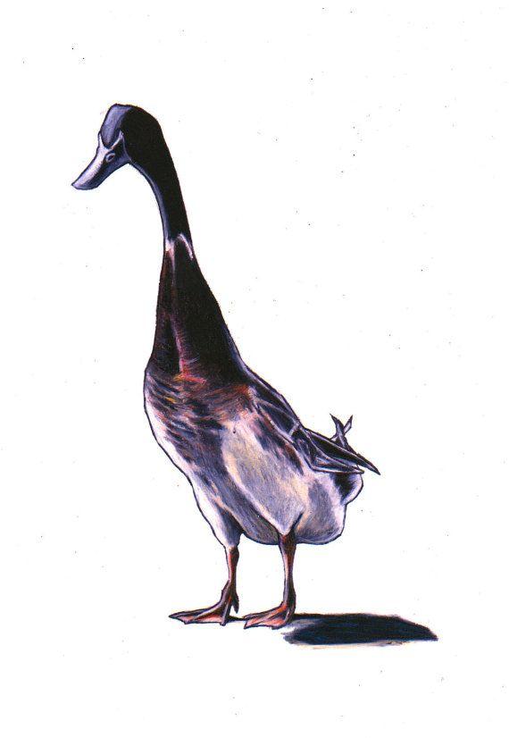 Duck art, drawing, Indian runner duck, wall art print, sketch ...