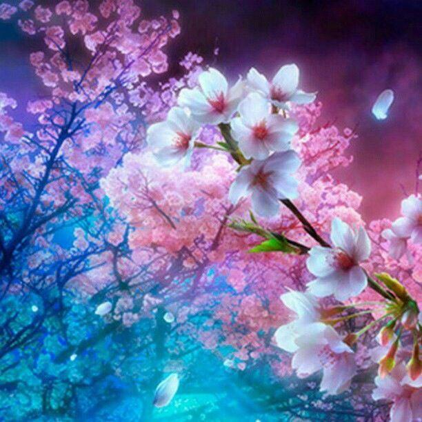 Cherry Blossoms Cherry Blossom Wallpaper Anime Cherry Blossom Cherry Blossom Background