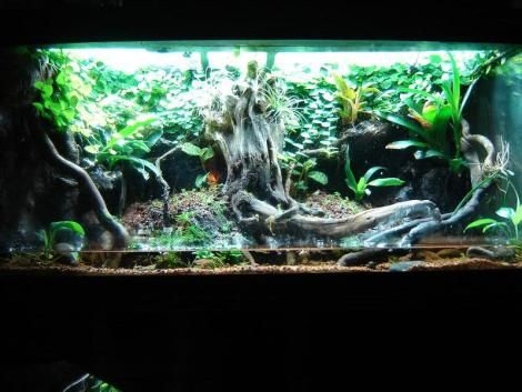 20 Gallon Dart Frog Vivarium Google Search Bearded Dragon Cage