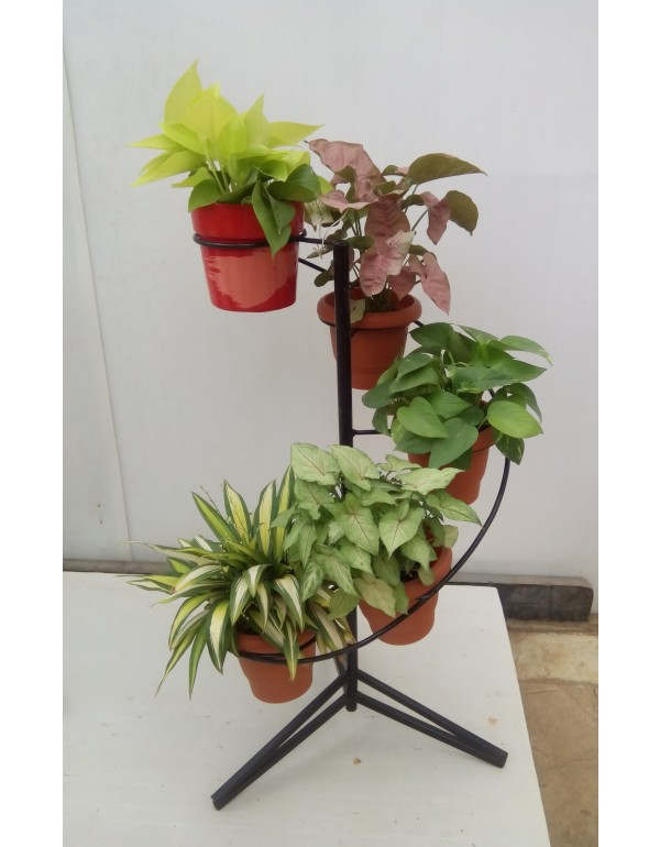 Spiral Pot Stand Ring Diy Plant Stand Plant Stand Wrought Iron Plant Stands