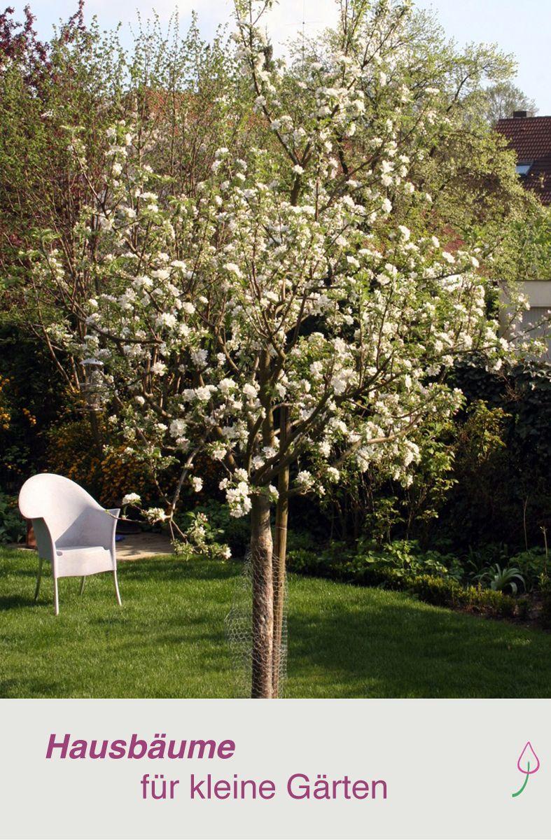 Ein Baum fr den Garten  Desmondo Wohnen  Pinterest  Bume garten Garten und Garten ideen