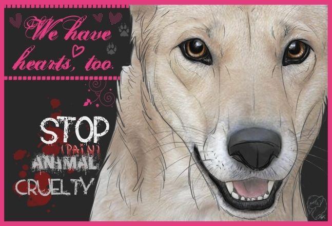 STOP ANIMAL CRUELTY - Against Animal Cruelty! Photo (15076214) - Fanpop