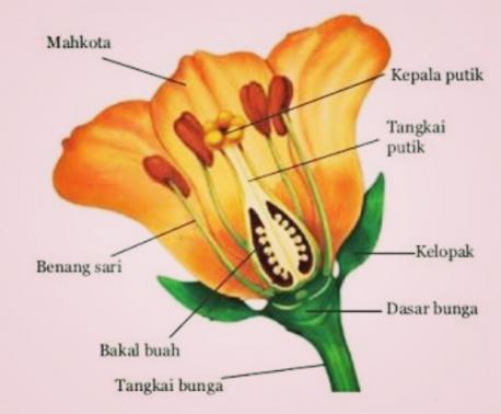 Contoh Gambar Bunga Dan Namanya Di 2020 Bunga Kembang Sepatu Lukisan Bunga Matahari