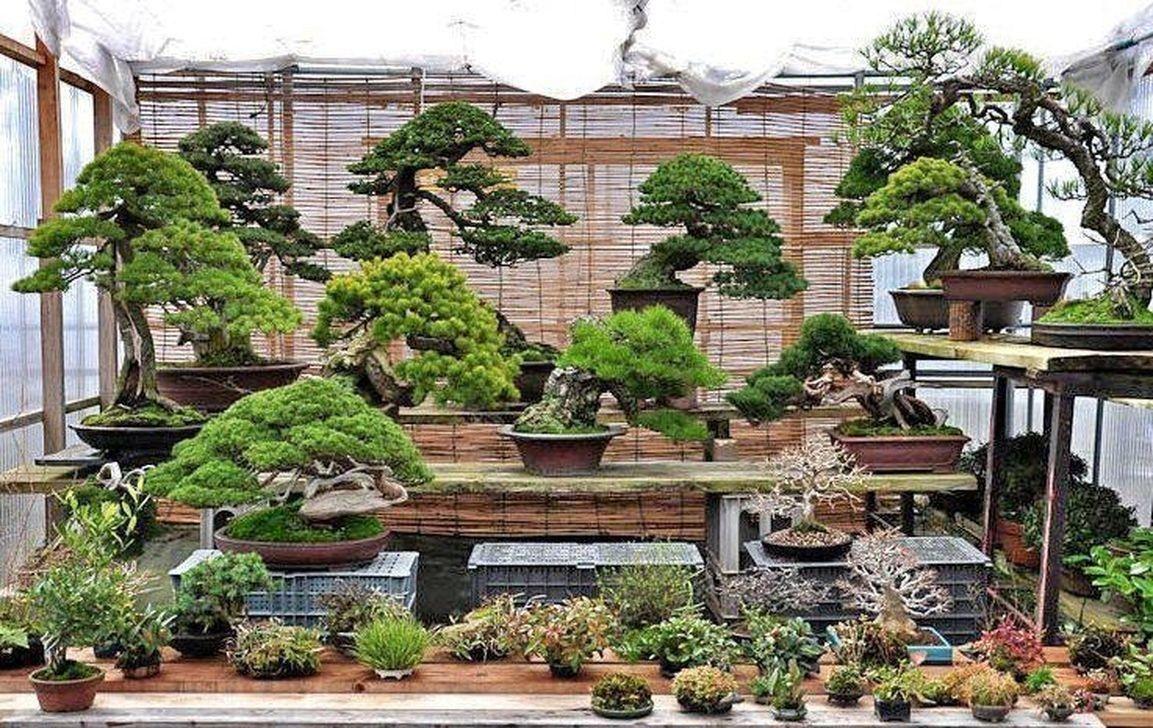 44 Stunning Bonsai Garden Ideas Best For Outdoor Decor Trendehouse Bonsai Garden Indoor Bonsai Indoor Bonsai Tree