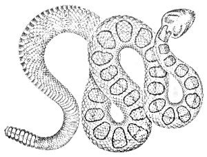 Rattlesnake Snake Coloring Pages Snake Sketch Coloring Pages