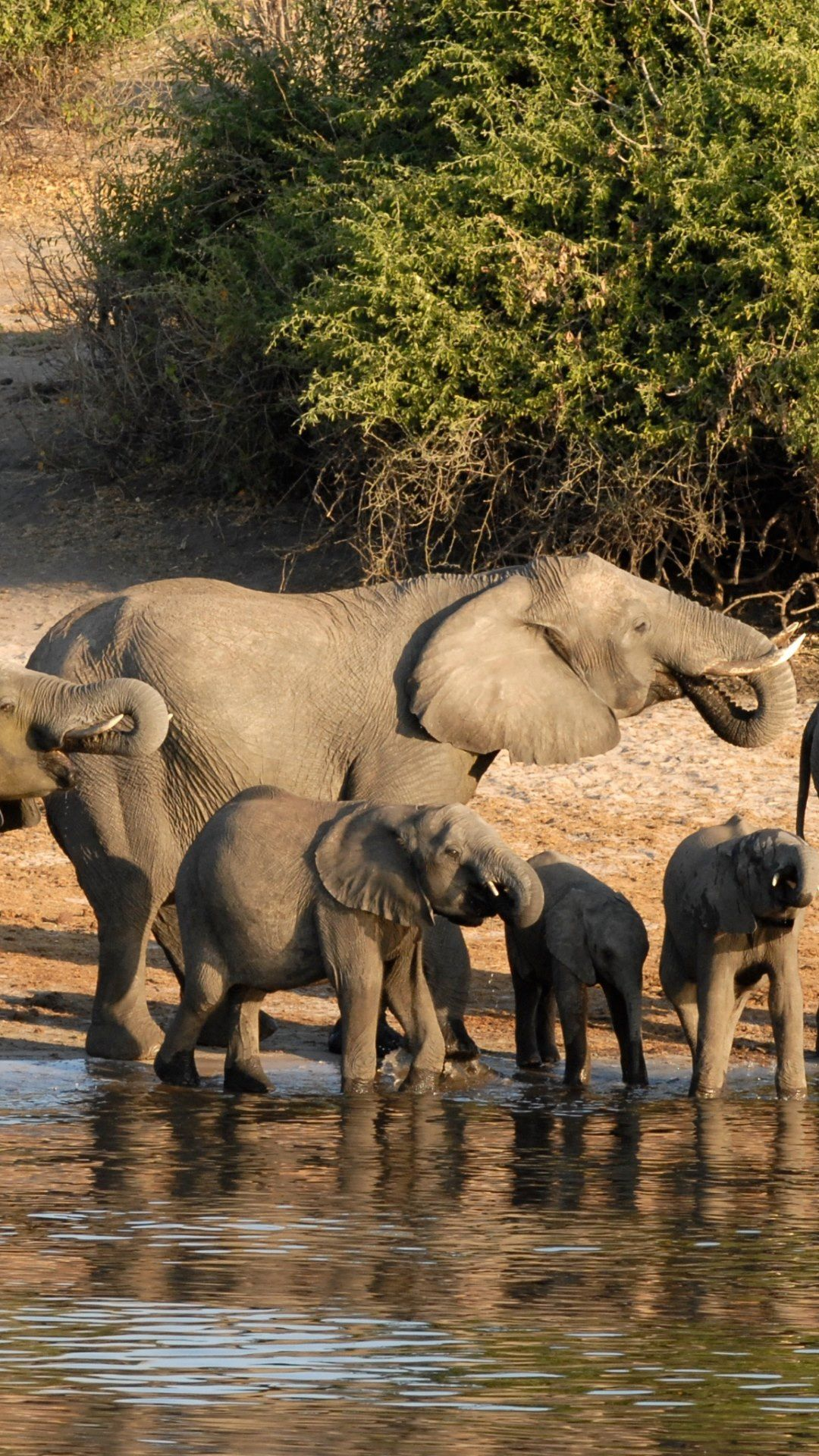 Cute Elephants Wallpaper Wallpapers Pinterest Elephant