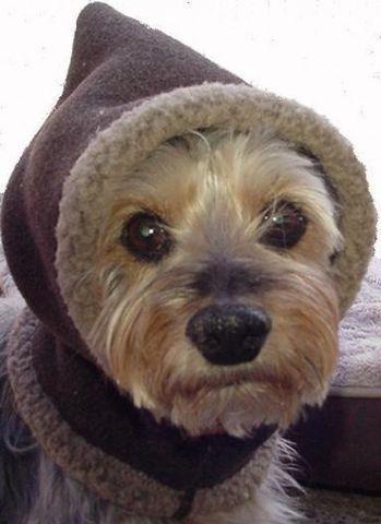 Performance PolarTec Snoodie Pull On Dog Hood Ear Warmer ...