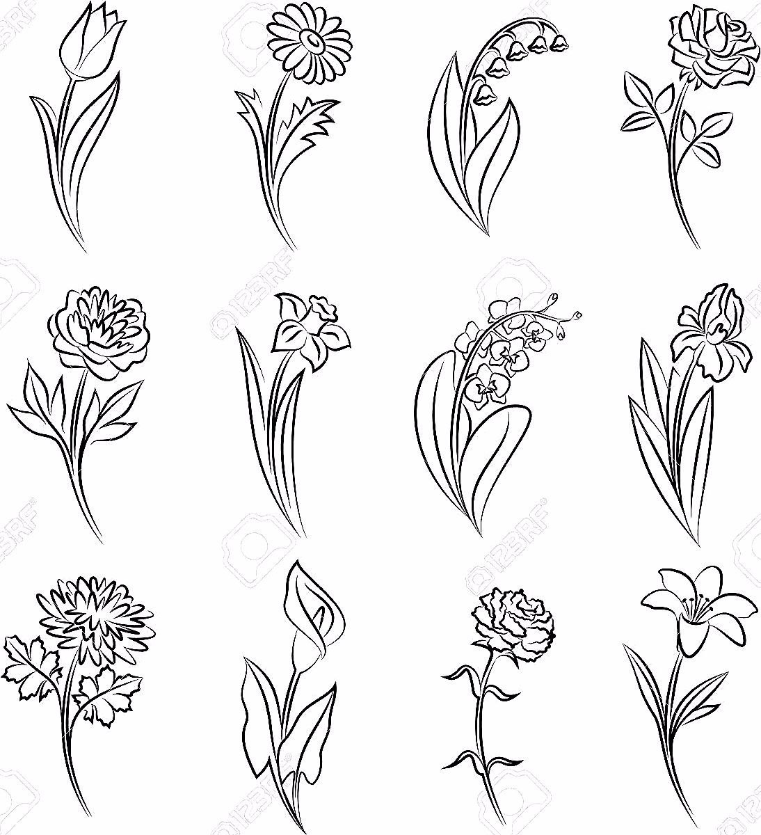 Outline Of Flowers Tulip Chamomile Lily Of The Valley Rose Peony Narcissus Orchid And Iris In 2020 Narcissus Flower Tattoos Flower Sketches Chrysanthemum Tattoo