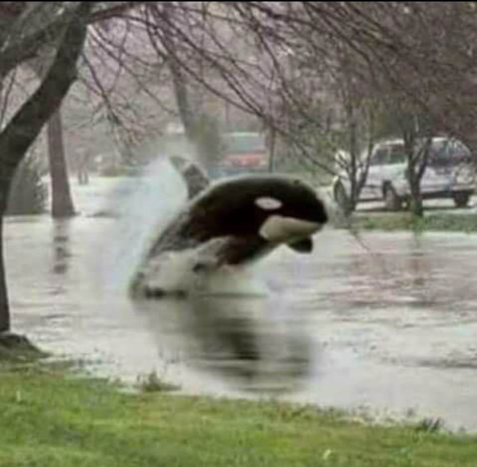 Yep Been Raining A Bit Too Much These Past Many Days Bald Eagle Animals Going To Rain