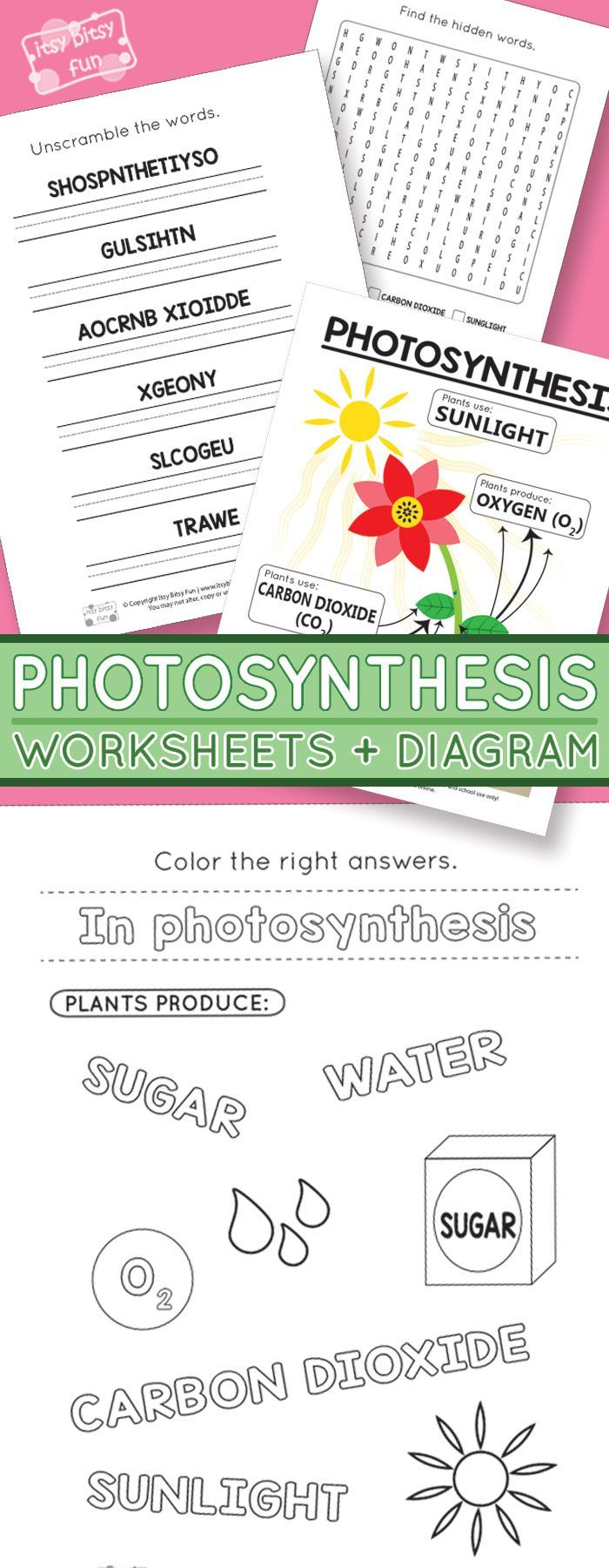 Photosynthesis Worksheets For Kids Itsybitsyfun Com Photosynthesis Worksheet Photosynthesis Activities Photosynthesis