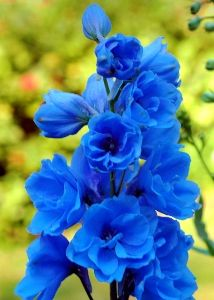 Resultado de imagem para flor esporeira