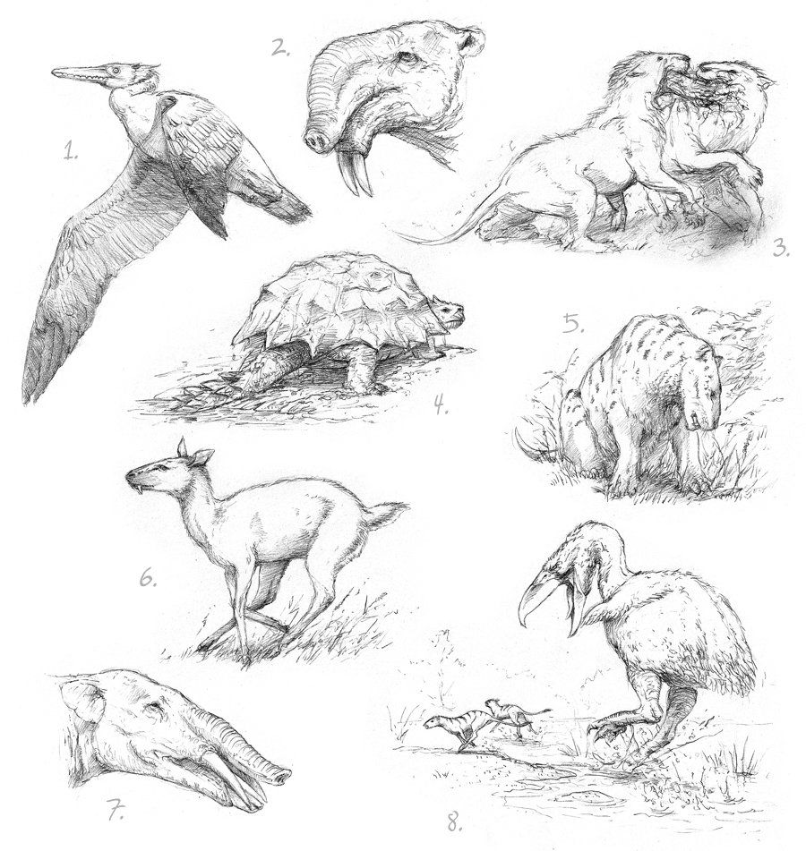 Image of: Easy Dinosaur Sketch Dinosaur Drawing Extinct Animals Prehistoric Creatures Prehistory Art Sketchbook Pinterest Pin By Johanna Thommen On Cenozoic Prehistoric Animals