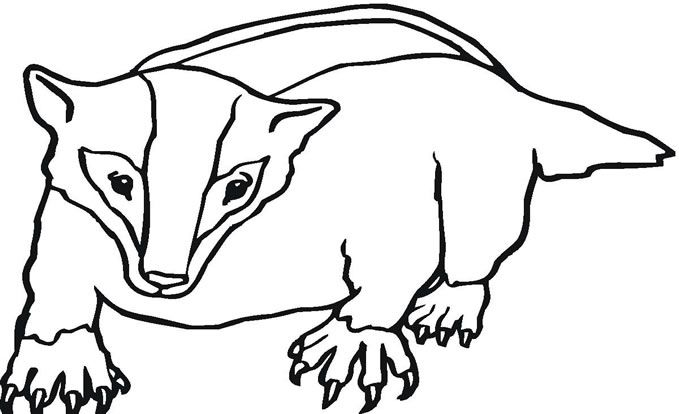 Badger Coloring Page Badger Coloring Page Coloringpages