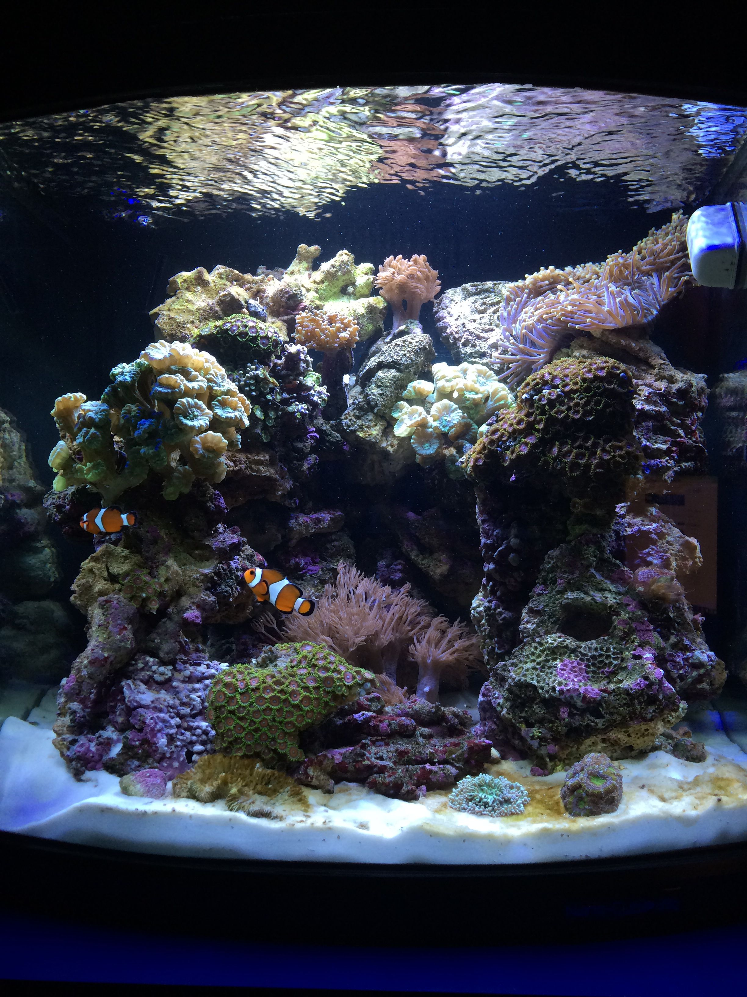 29 gallon biocube | My Saltwater Aquarium | Pinterest ...