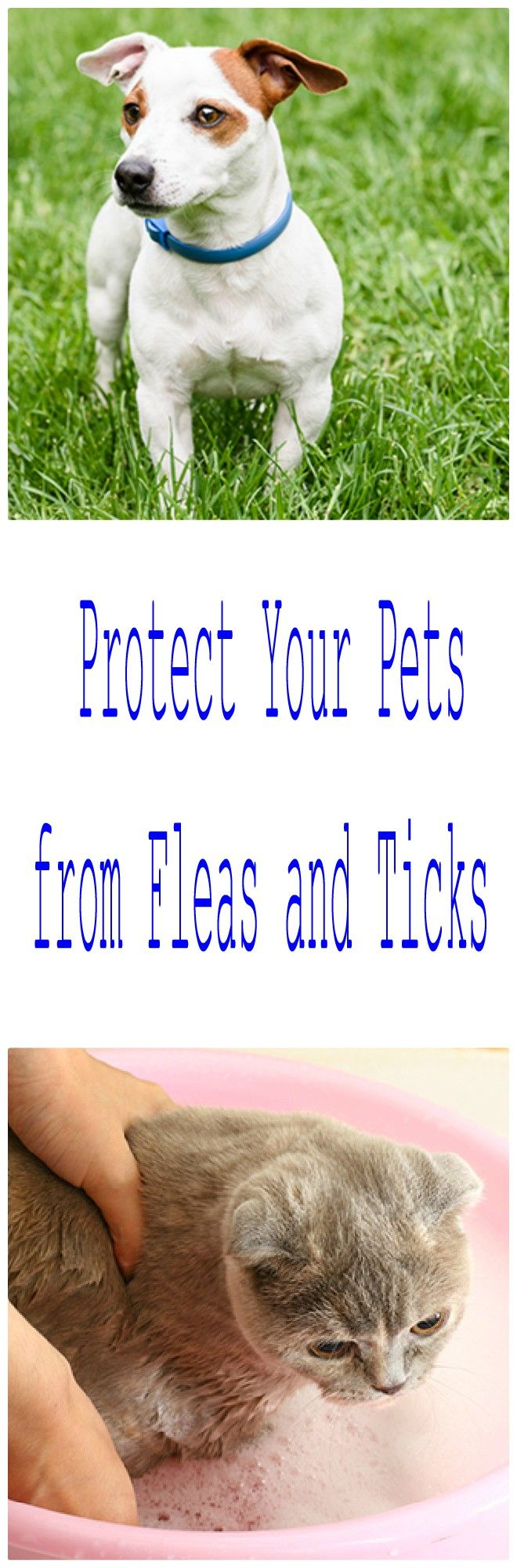 A guide to flea and tick prevention products for dogs and