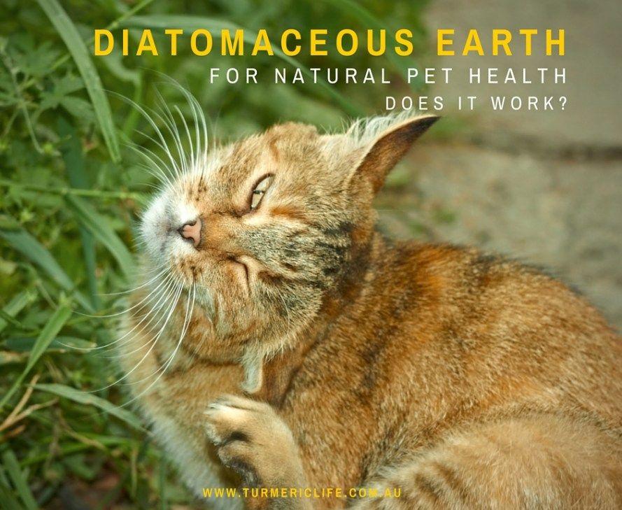 diatomaceous earth fleas Diatomaceous earth