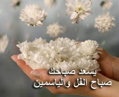 يسعد صباحك صباح الفل والياسمين Floral Flower Beauty Flowers