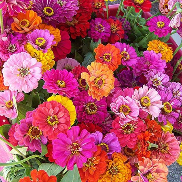 Grow Your Own Wedding Flowers: Zinnia Heaven-plant In Summer