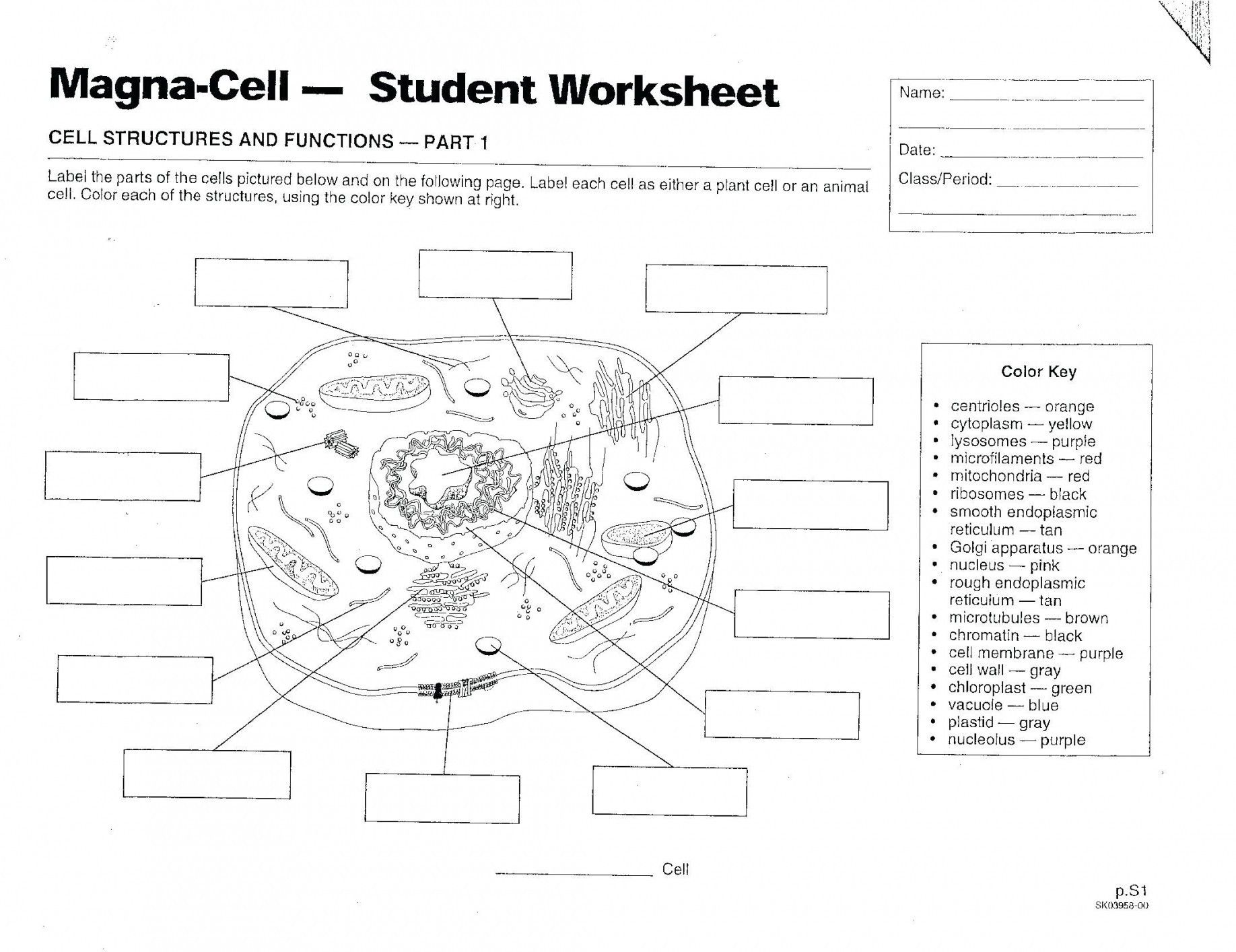 50 Animal Cell Coloring Answer Key Wh0z Di