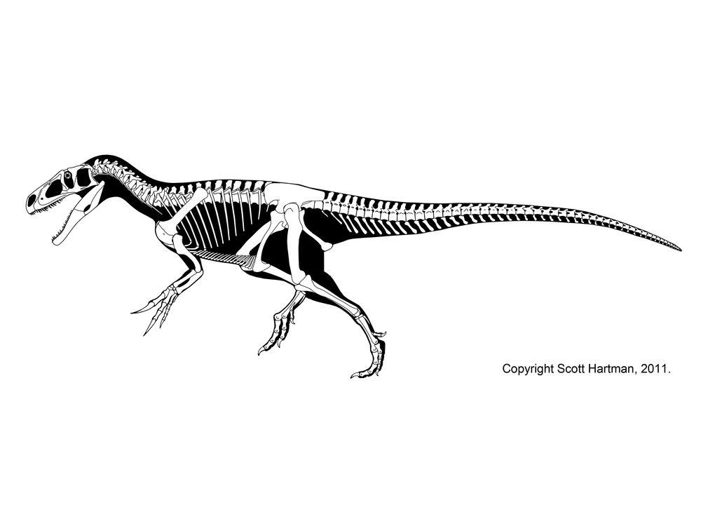marshosaurus bicentesimus scott hartman
