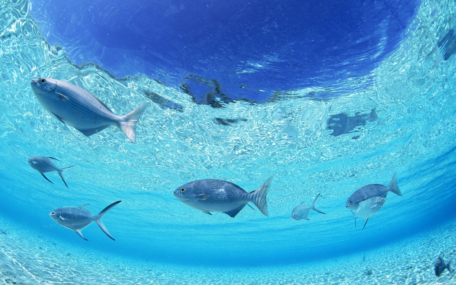 photos of ocean scenes | dynamic ocean scenes desktop wallpaper