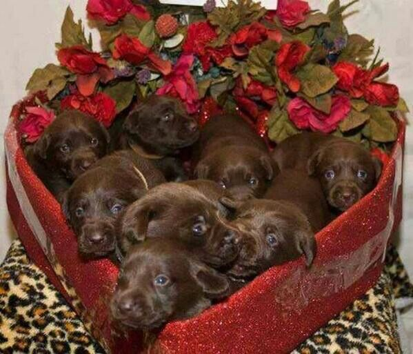 Nothing Sweeter 4 Valentines Day Than A Heart Shaped Box